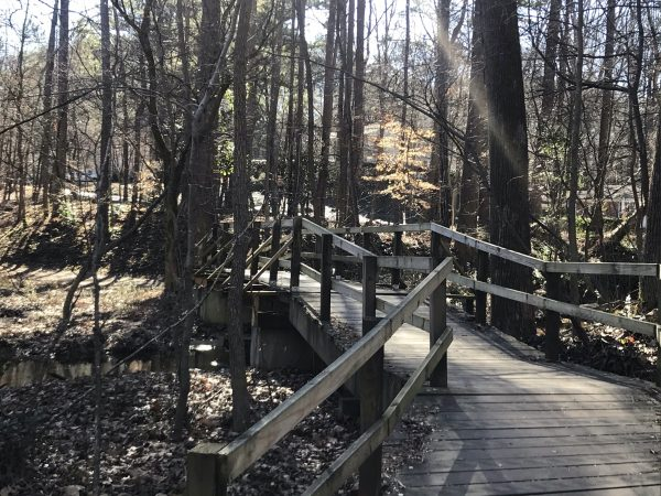 Wooden boardwalk through the woods at Murphey Candler Park.