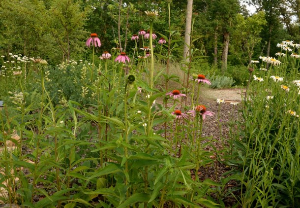 flowers in a buterfly and pollinator garden at Dahlonega Butterfly Garden
