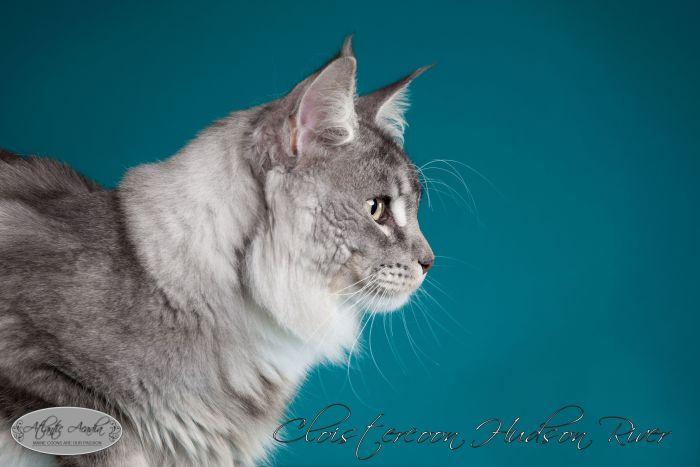 Kat (3 von 84)bhpa