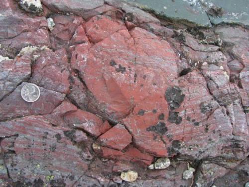 Ilmuwan Inggris Menemukan Fosil 'tertua' yang …