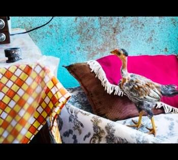 to Apr 26 | PHTOGRAPHY EXHIBIT | Bruno Saavedra | Chiado | FREE @ Galeria De Santa Maria Maior | Lisboa | Lisboa | Portugal