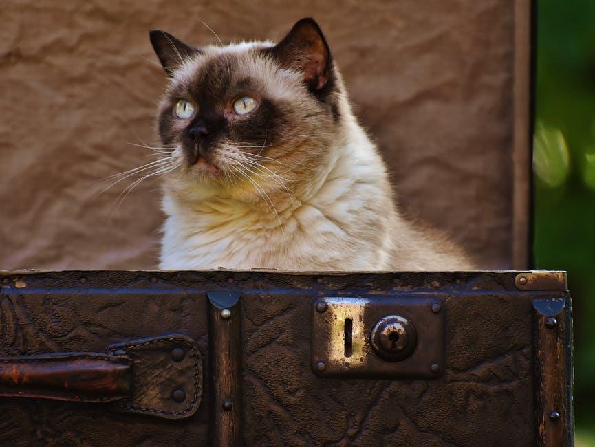 7 maddede kedi ile Avrupa'ya nasıl uçulur?