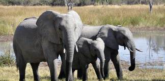 New Elephant Experience For Zimbabwe