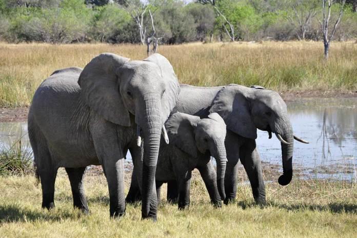 New Elephant Experience For Zimbabwe