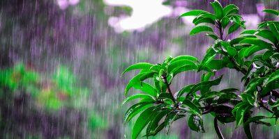 bright-environment-flora-1463530