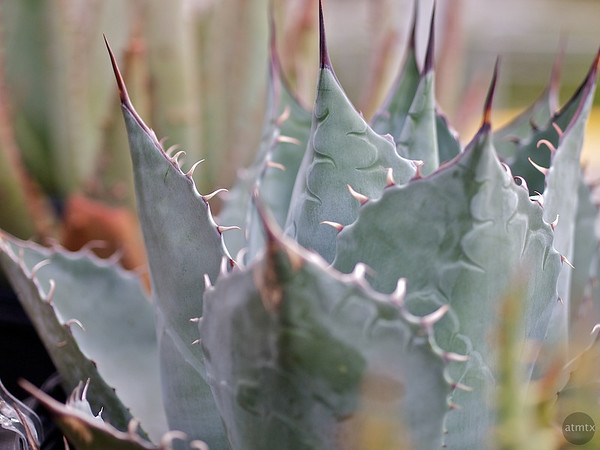 Agave, Whole Foods Market - Austin, Texas