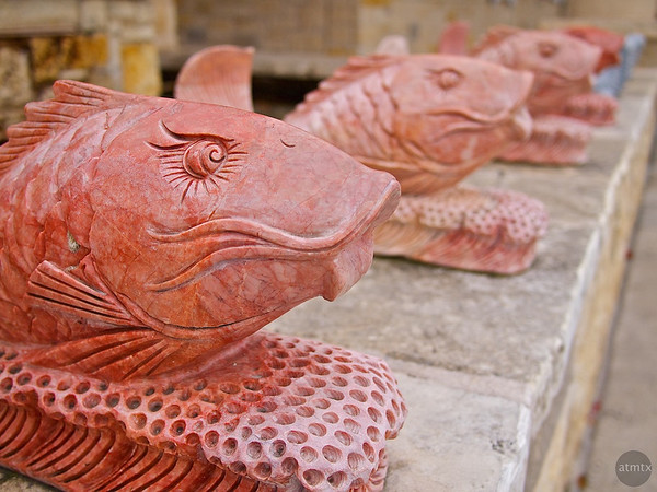 Stone Fishes