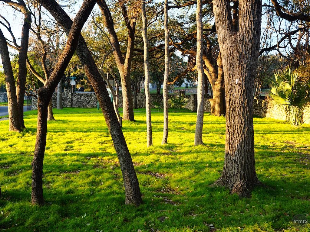 Mismatched Trees, Mayfield Park - Austin, Texas