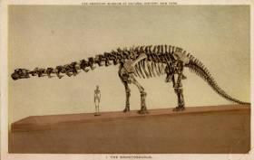 brontosaurus skeleton
