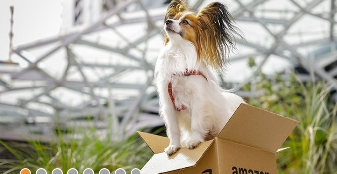 Amazon Dog