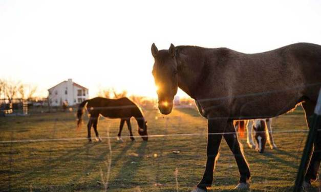 Essay on Horse for School Kids & Students in English