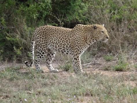Safári no Kruger Park - África do Sul
