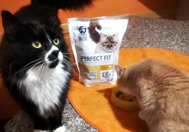 perfect fit alimento gatti
