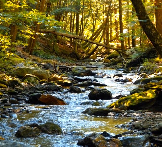 grelock stream