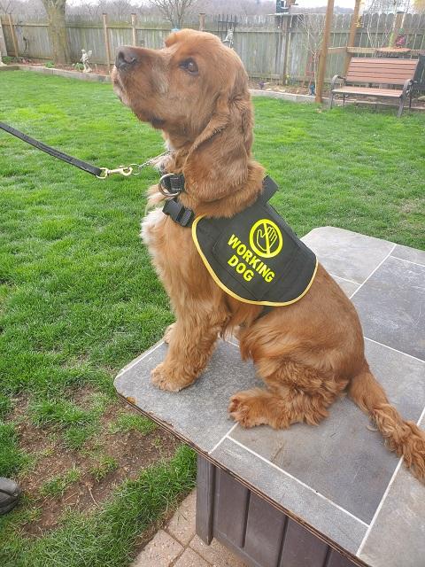 Detection Dog Training