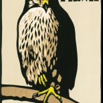 Book Review | H is for Hawk by Helen Macdonald