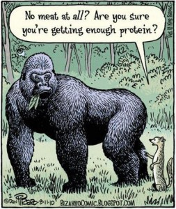 Enough-protein-1