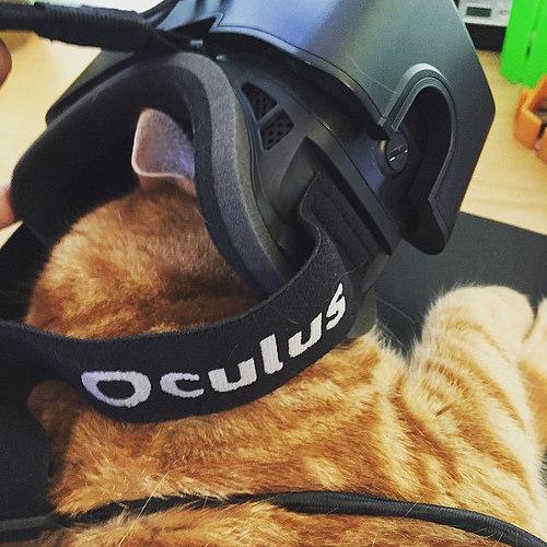 Gatto realtà virtuale oculus