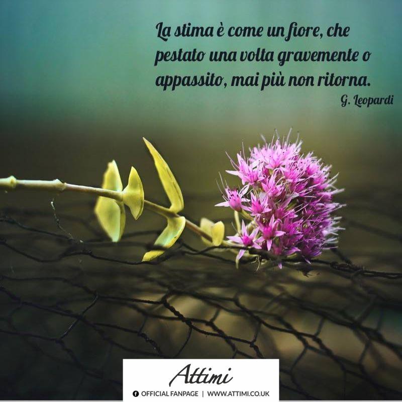 La stima è come un fiore, che a pestato una volta gravemente, o appassito, mai più non ritorna. ( Giacomo Leopardi )