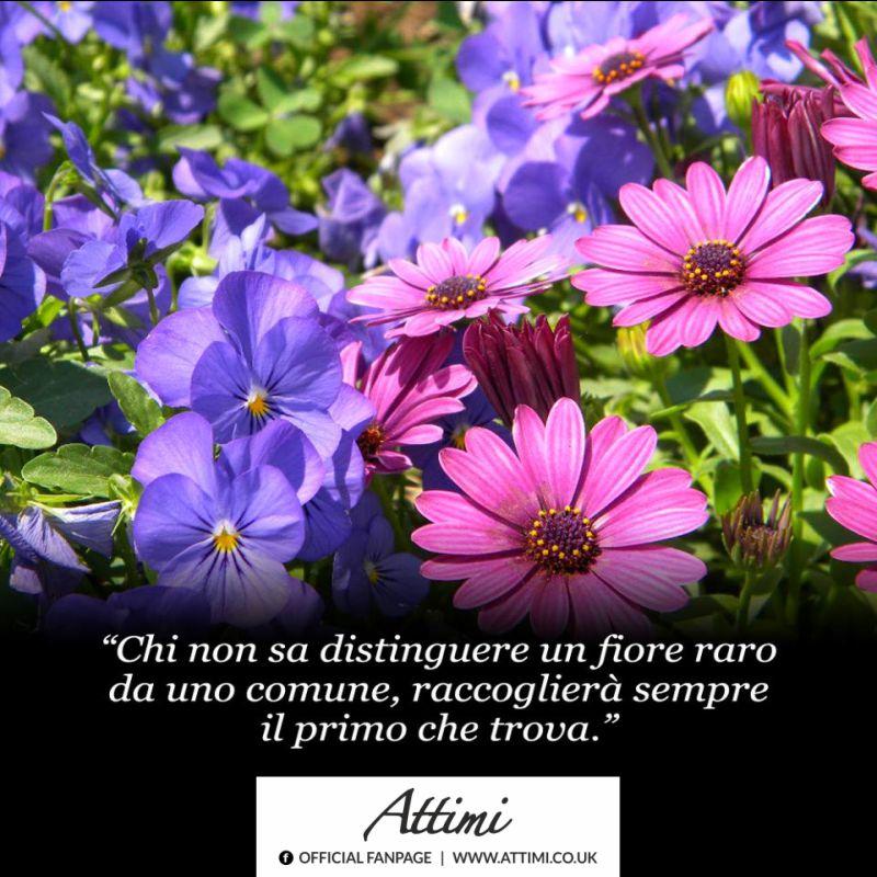 Chi non sa distinguere un fiore raro da uno comune, raccoglierà sempre il primo che trova.