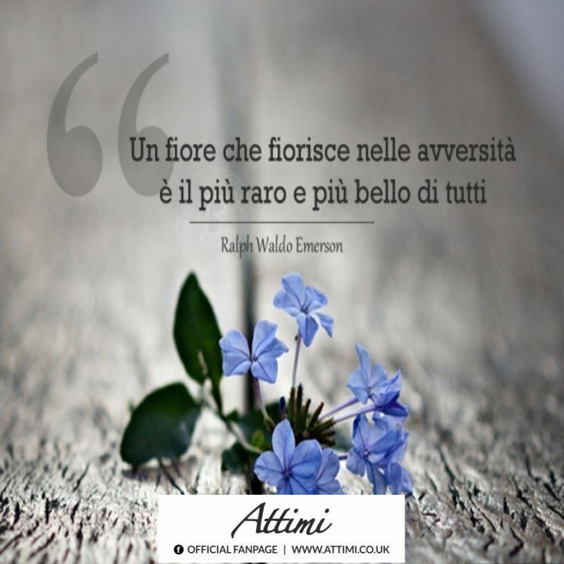 Un fiore che fiorisce nelle avversità è il più raro e più bello di tutti. (Ralph Waldo Emerson)