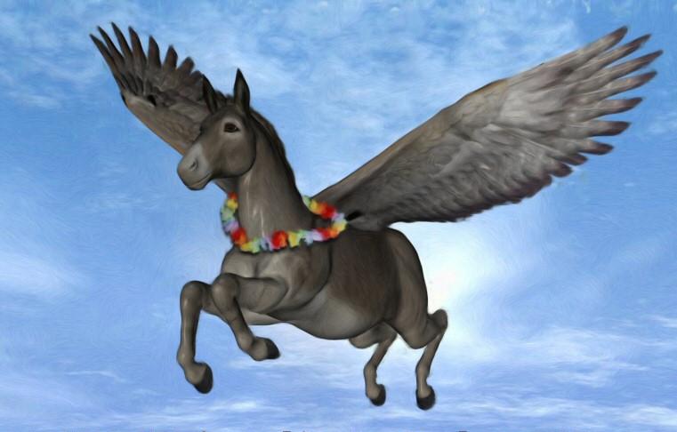 Mahalo_Donkey_Fly_by_FW_Hendriks