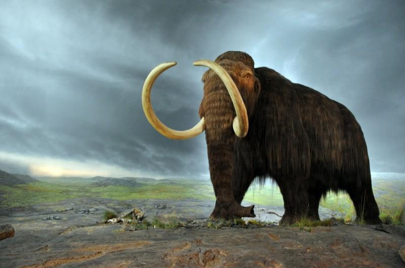 lanoso mamute-