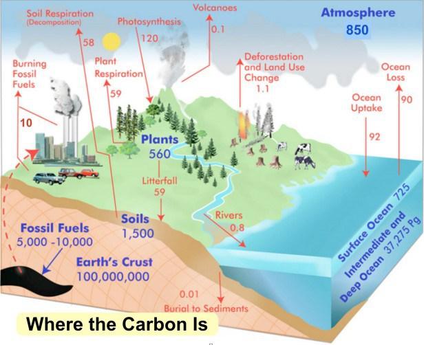 carbon_where