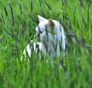 cat-1351300_640