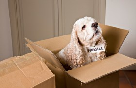 San Francisco Moving With Pets