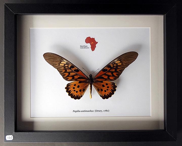 Entomologie Collection D Insectes Naturalis 201 S Sous Cadre