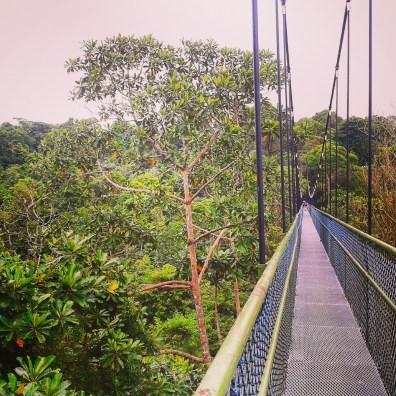 Le TreeTop, une immense passerelle au-dessus de la forêt tropicale