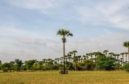 Paysage d'une route de campagne à Bagan