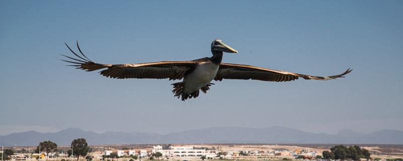 un oiseau survolant la ville - Serena (Chili)