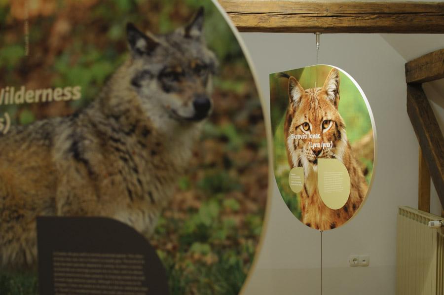 Au centre d'information, on peut avoir en savoir davantage sur le lynx et le loup : deux animaux présents au Parc national de Risnjak en Croatie mais craintif donc il est difficile de les observer.