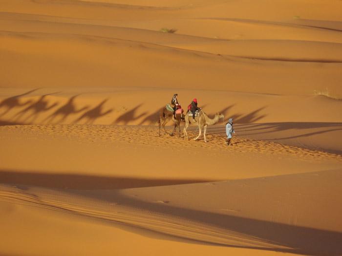 Camel Ride Desert Morocco, Auberge Café Du Sud