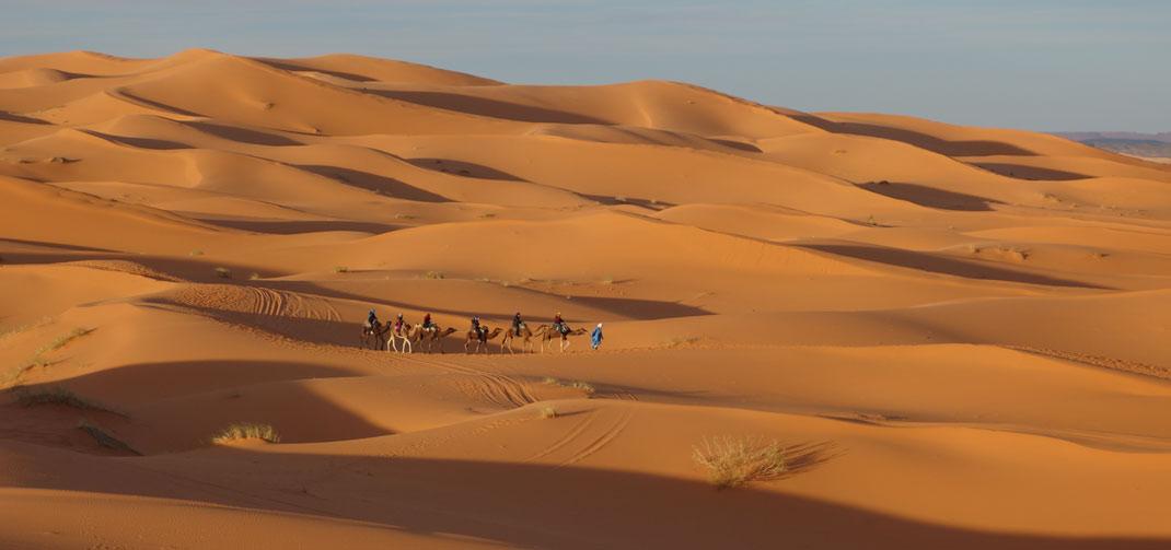 Excursión en camello por el desierto