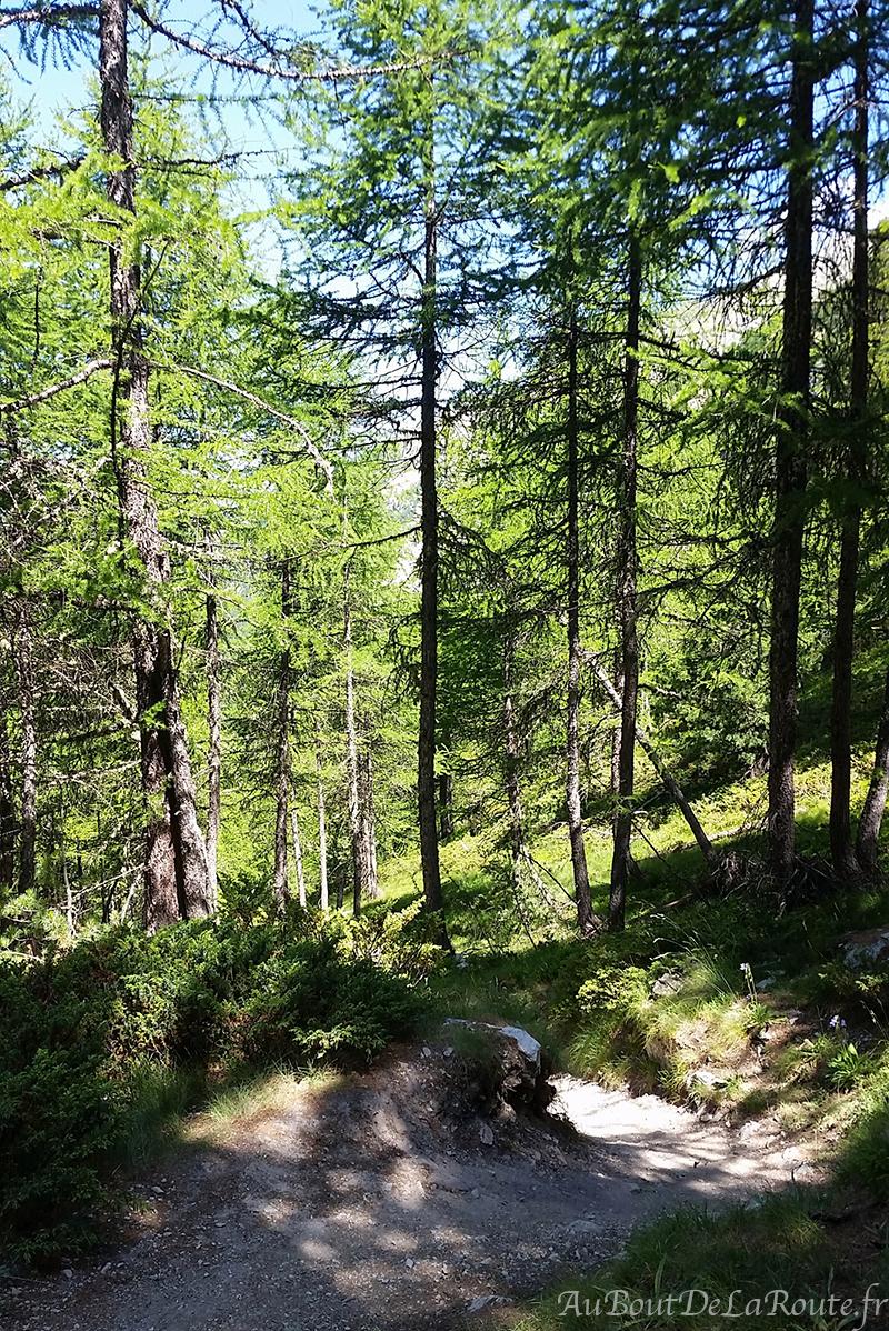 Forêt de Chaurionde