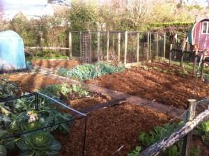 veggie-patch-mulched