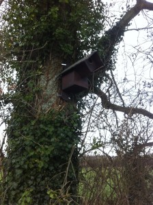 little-owl-box