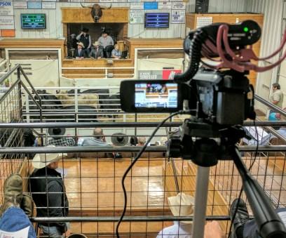Streaming the KAA livestock contest