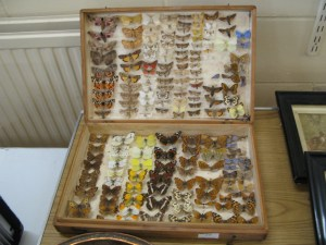 Lot 25 - Collection of butterflies and moths in wooden case - Sold for £25