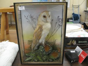 Lot 132 - A stuffed and cased Barn Owl which lived in the seller's great grandfather's garden in Bristol - Sold for £70