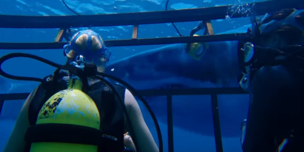 47 Meters Down is the Horror Experience of the Summer