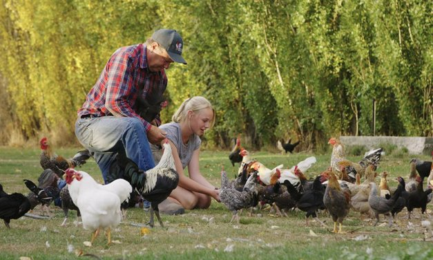 MIFF 2017: Pecking Order is a Warm and Fuzzy look at Poultry Pageantry