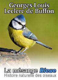 Illustration: Histoire naturelle des oiseaux-La Mésange Bleue - Leclerc de Buffon