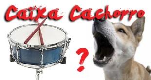 Caixa cachorro - Sua caixa morde ou late? 6