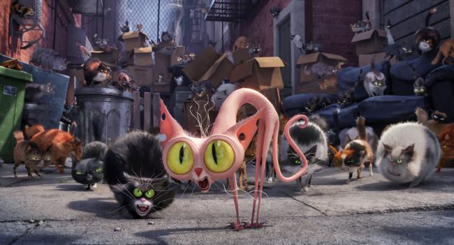 Mascotas 2016 gatos callejeros