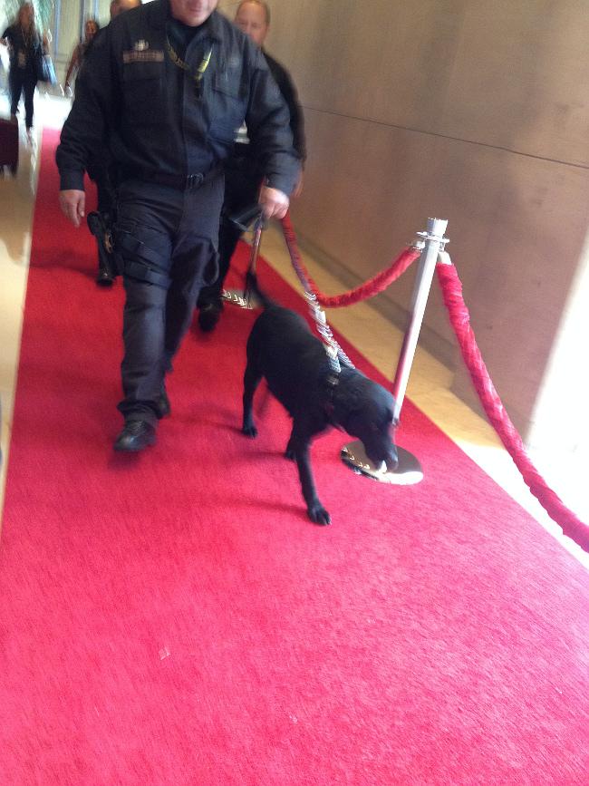 Raimundo Globos Oro 2015 unidad canina