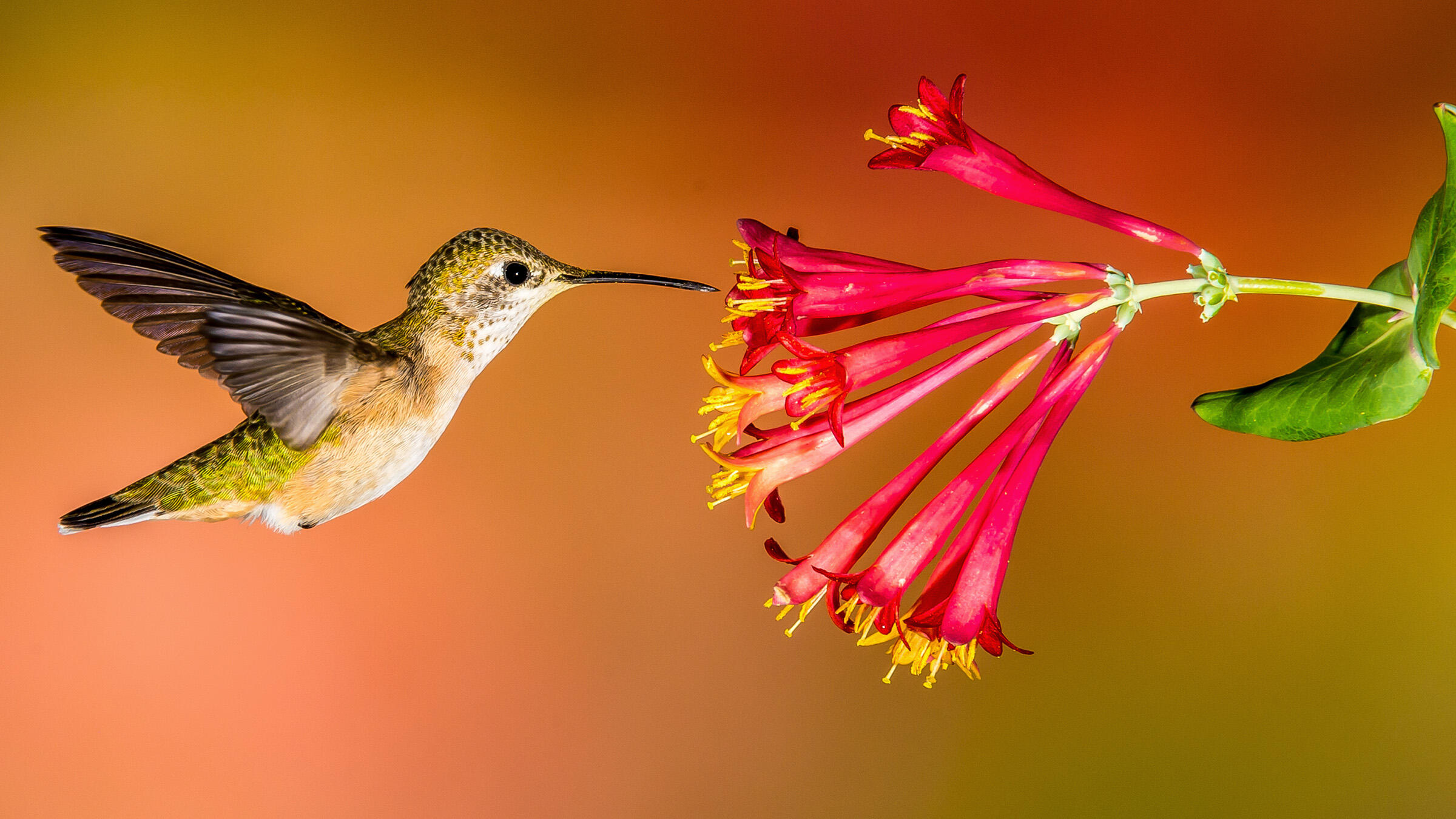 Image result for hummingbird